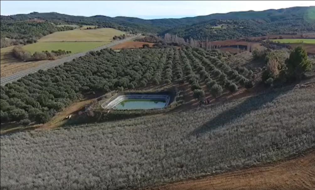 plantaciones de trufa en Aragón
