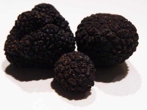 el primer mercado de la trufa negra tuber melanosporum